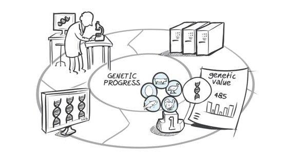 Hypor drawing genomic