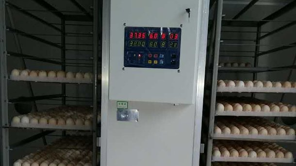 incubation china