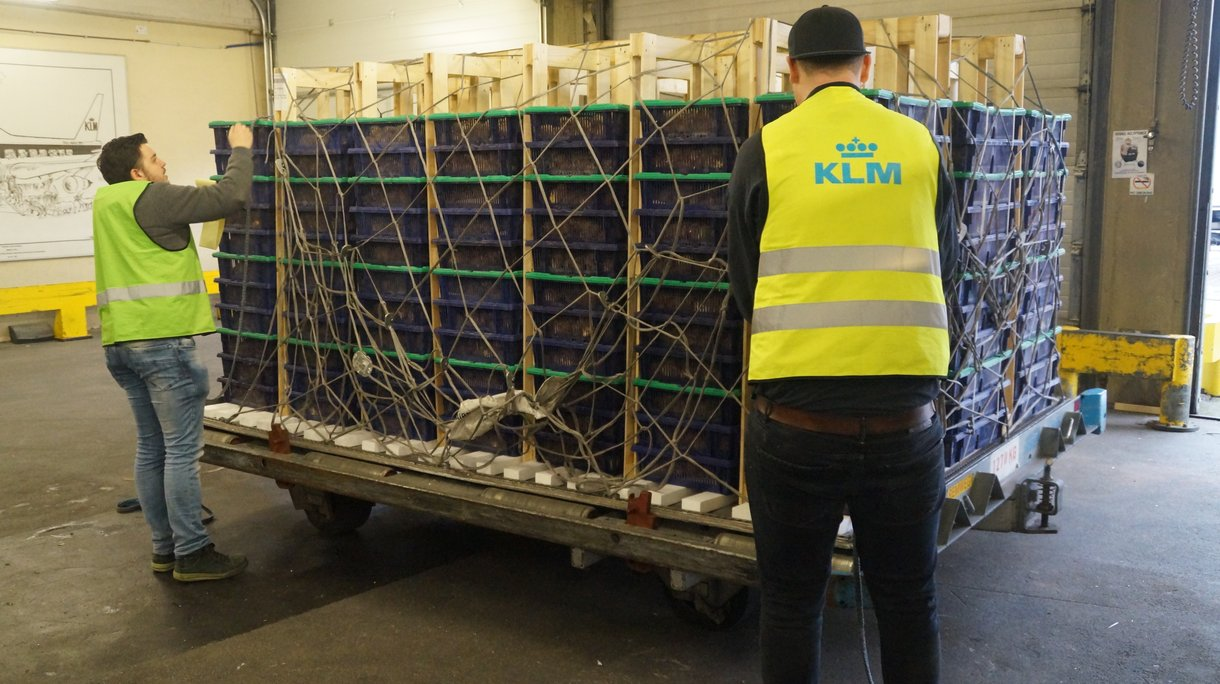 chick boxes isa export