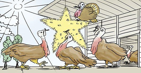 1 star beter life turkey