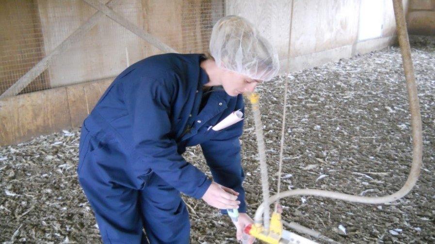 waterline testing