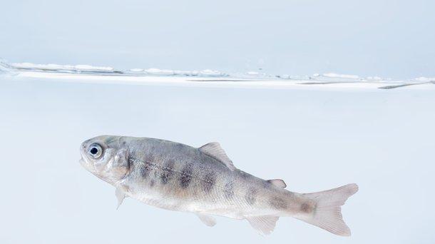Troutlodge 001 0662 fish example.jpg