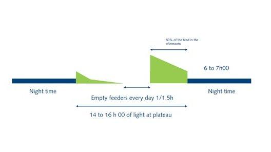 Feed chart