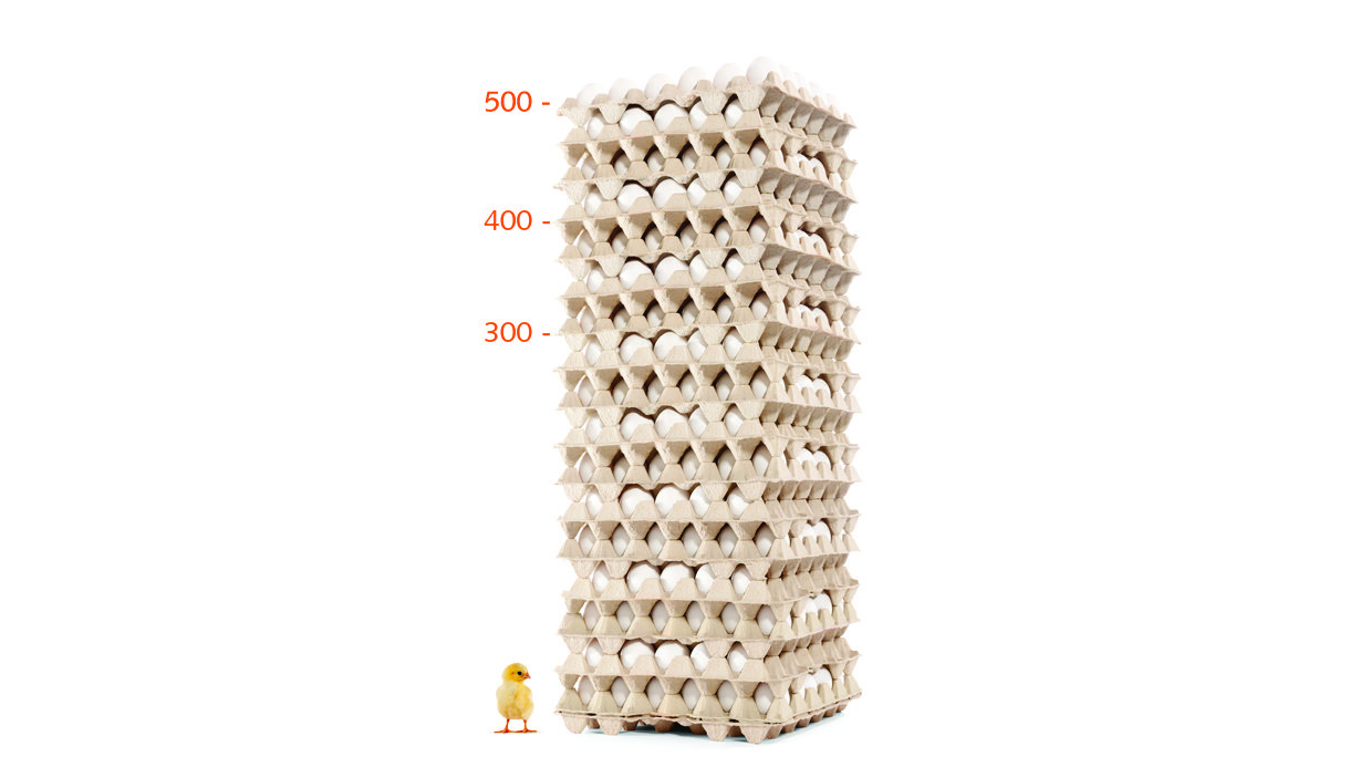 dekalb egg tower white and chicken layers