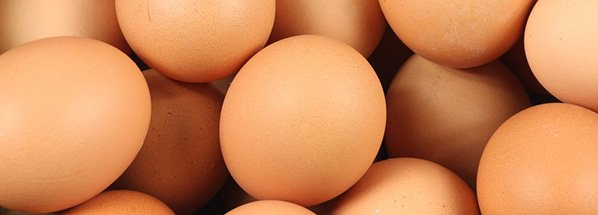 eggs brown layers