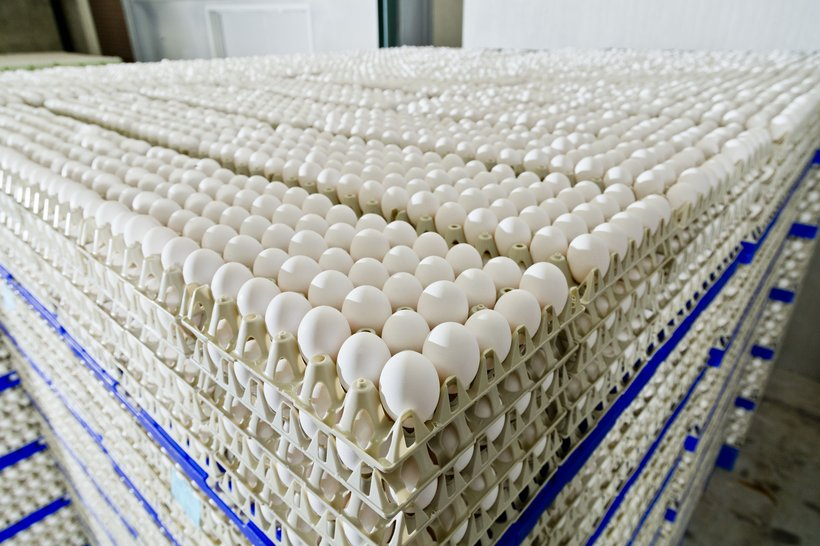 eggs white layers
