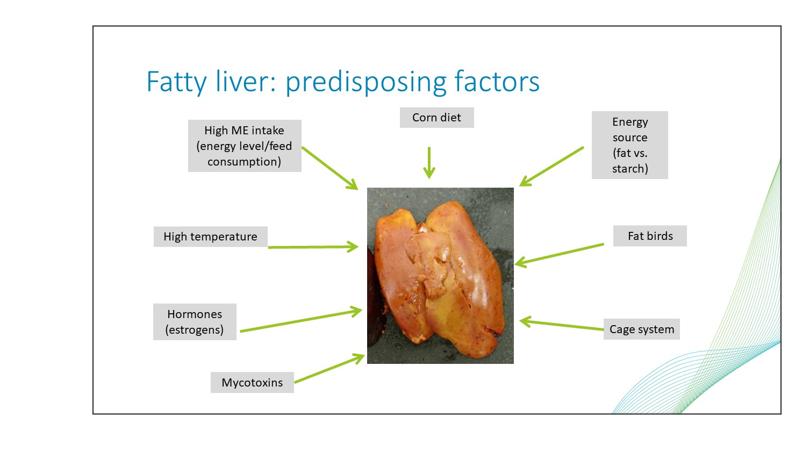 fatty liver factors