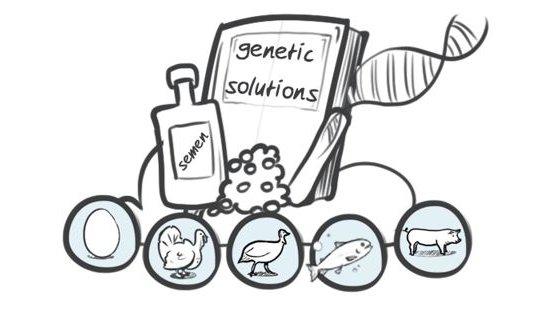 Hypor drawing genetic solutions