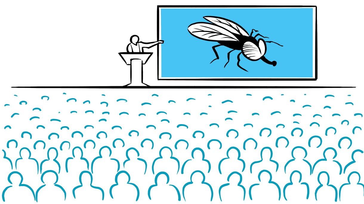 Black fly presentation