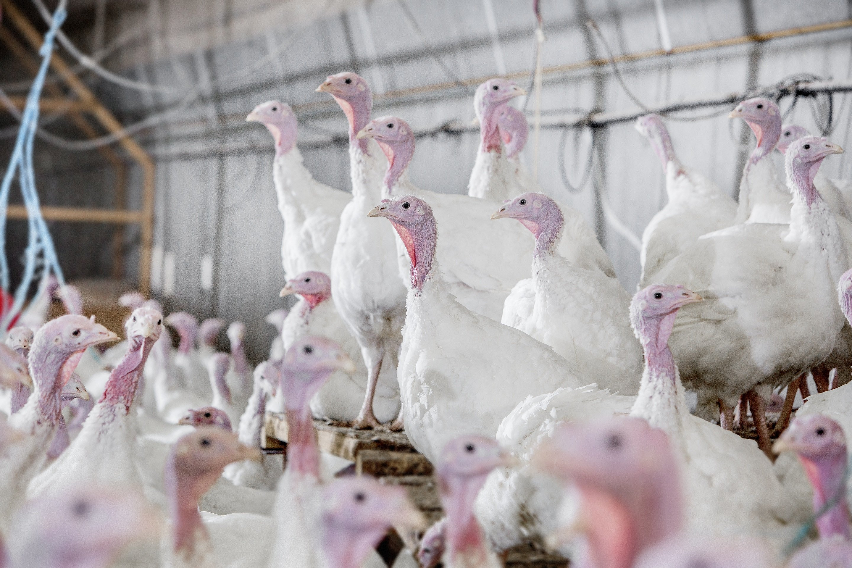 turkey test farm.jpg