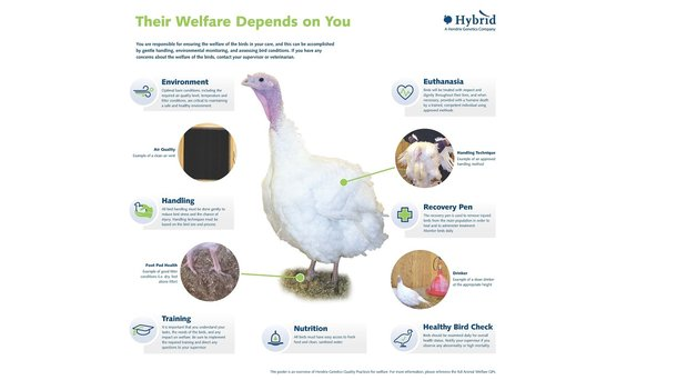 Turkey Welfare3